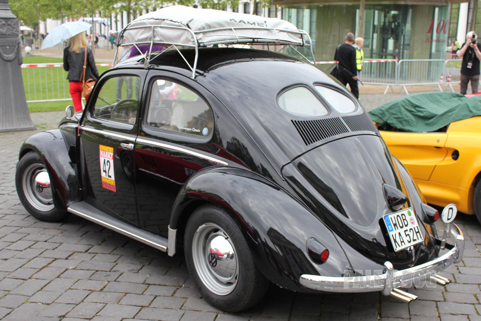 volkswagen paledog photo collection
